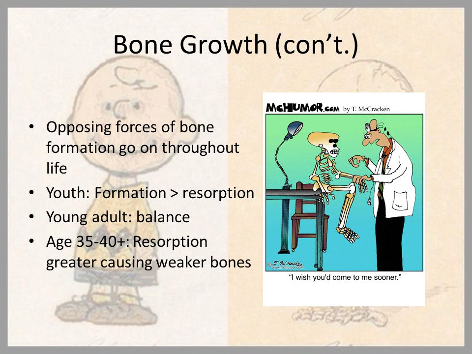 Bone Growth (con't.) Opposing forces of bone formation go on throughout life. Youth: Formation > resorption.