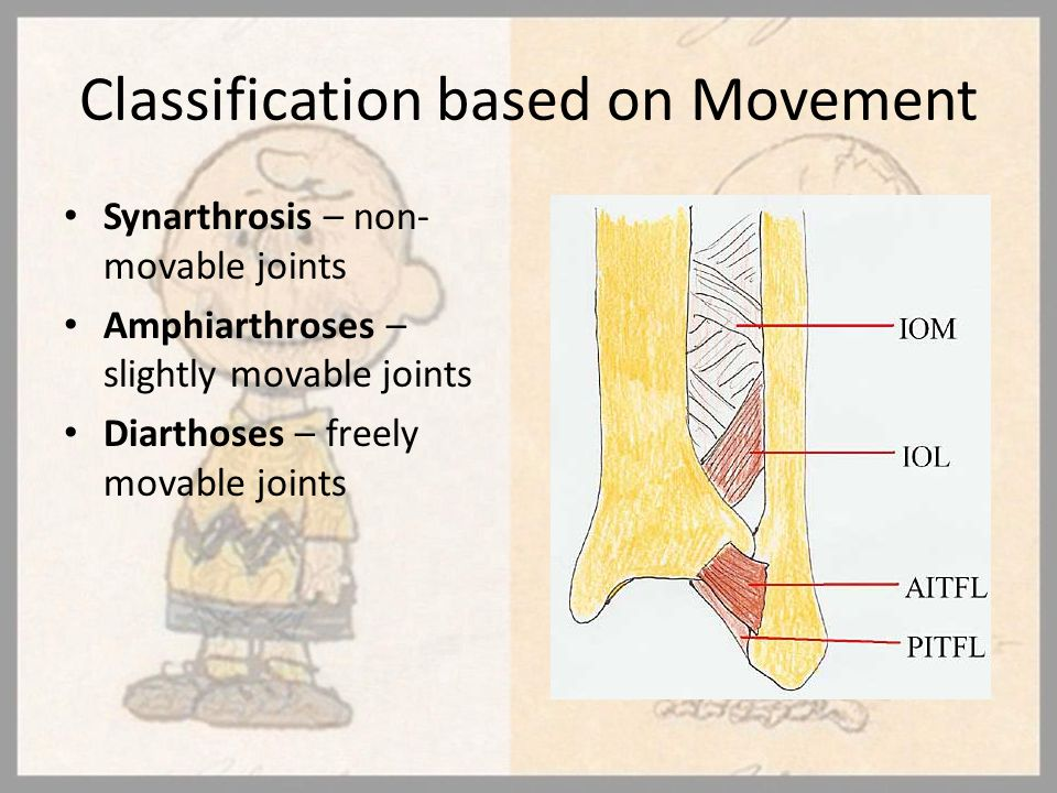 Classification based on Movement