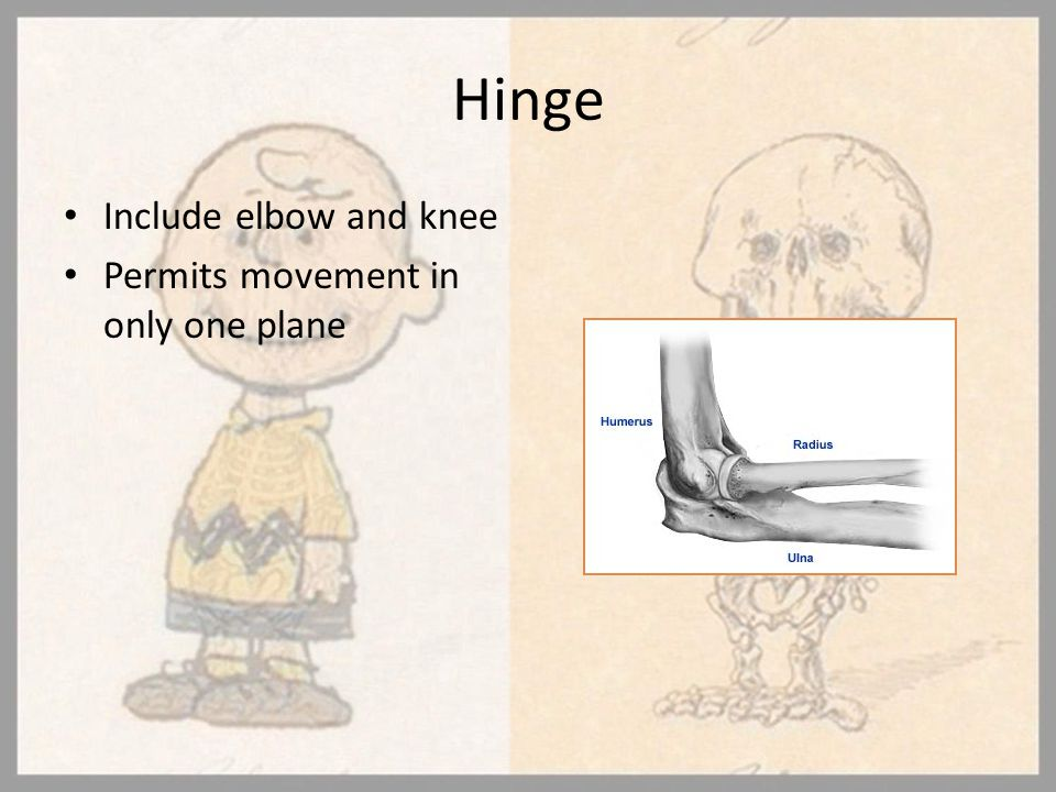 Hinge Include elbow and knee Permits movement in only one plane