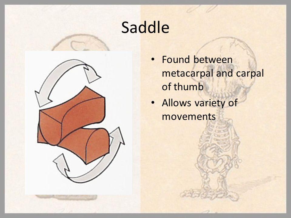 Saddle Found between metacarpal and carpal of thumb
