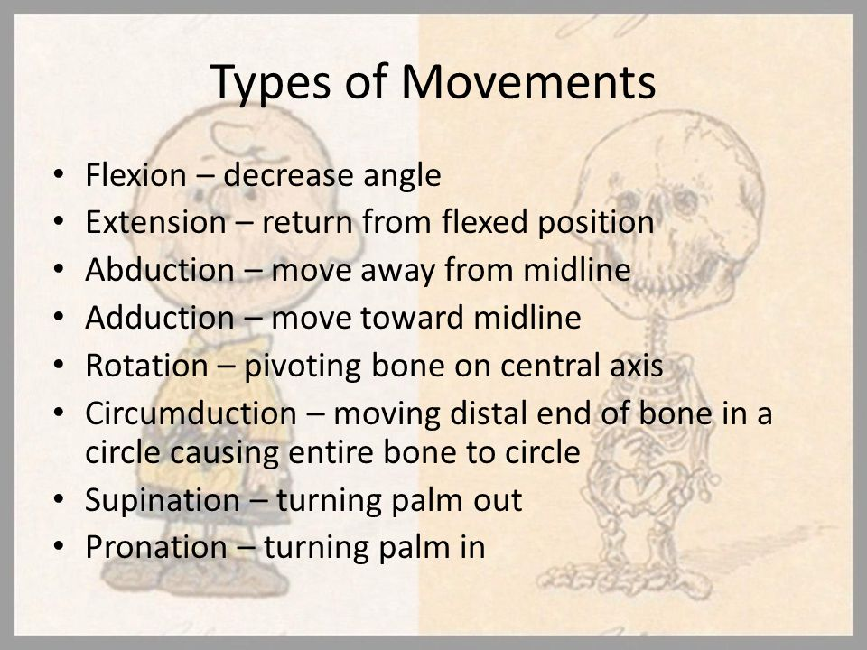 Types of Movements Flexion – decrease angle