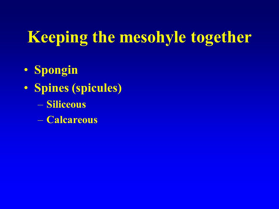Keeping the mesohyle together