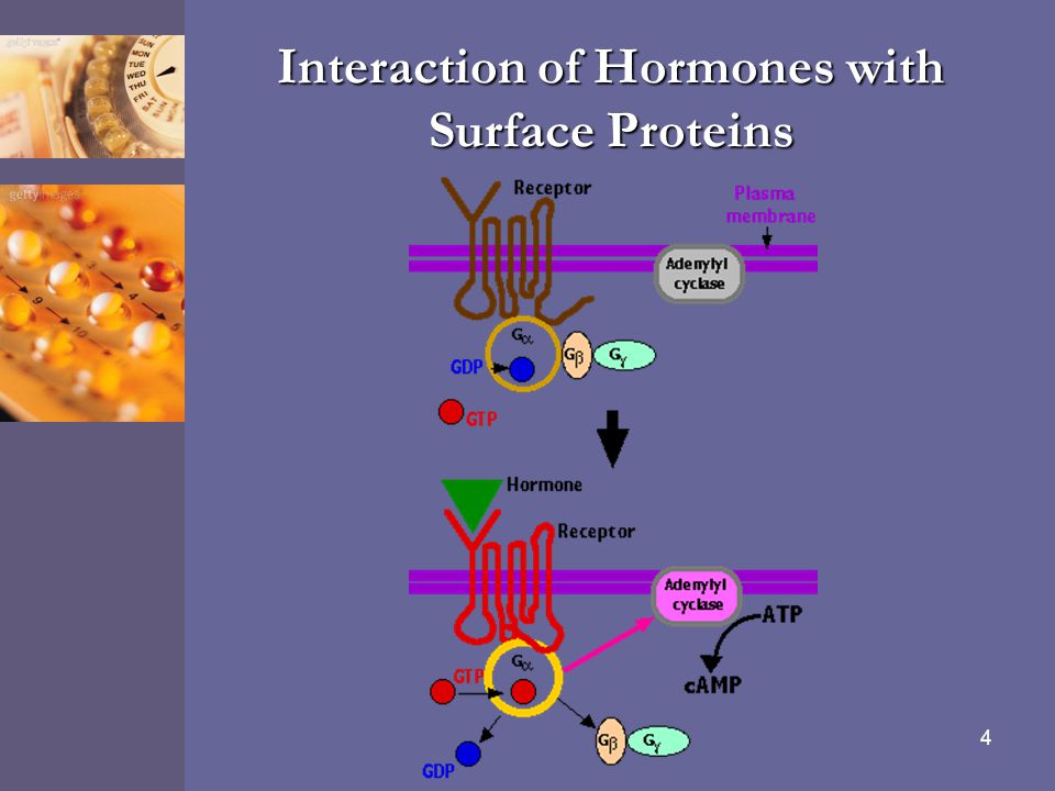 Interaction of Hormones with Surface Proteins