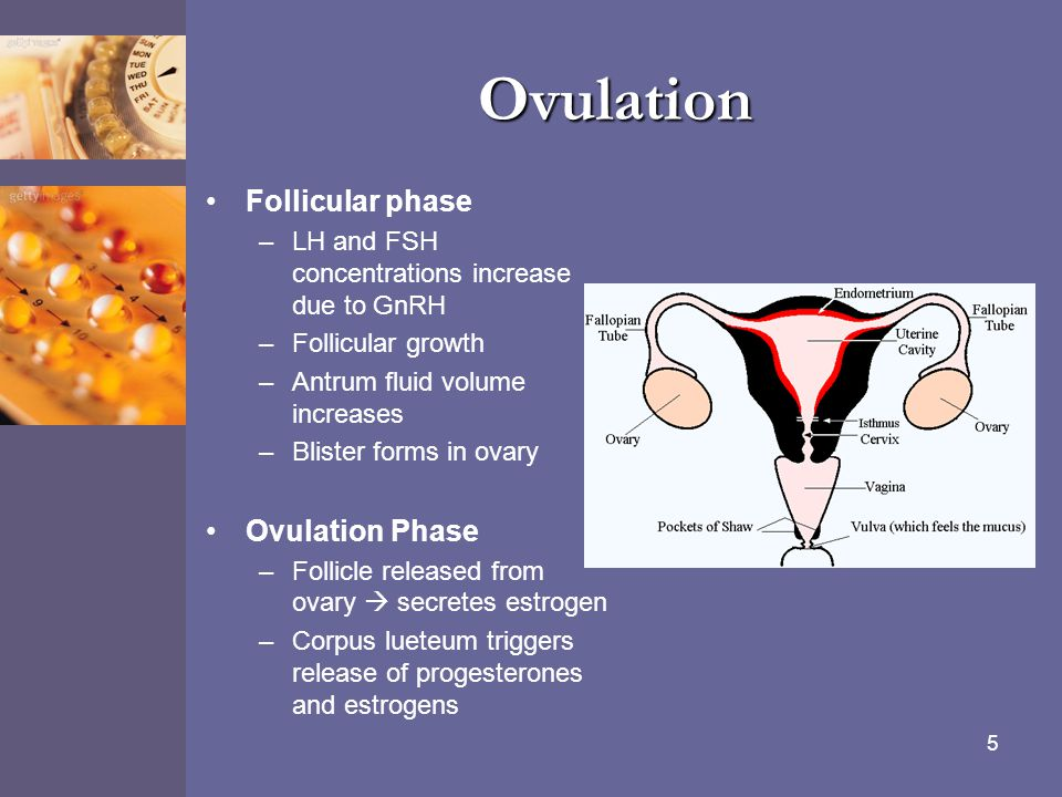 Ovulation Follicular phase Ovulation Phase