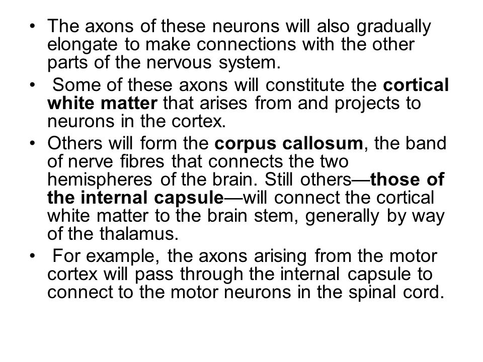 The axons of these neurons will also gradually elongate to make connections with the other parts of the nervous system.