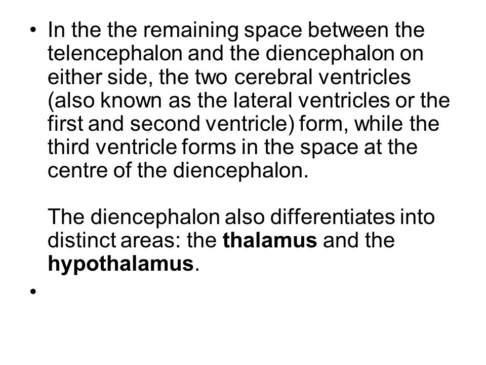 In the the remaining space between the telencephalon and the diencephalon on either side, the two cerebral ventricles (also known as the lateral ventricles or the first and second ventricle) form, while the third ventricle forms in the space at the centre of the diencephalon. The diencephalon also differentiates into distinct areas: the thalamus and the hypothalamus.