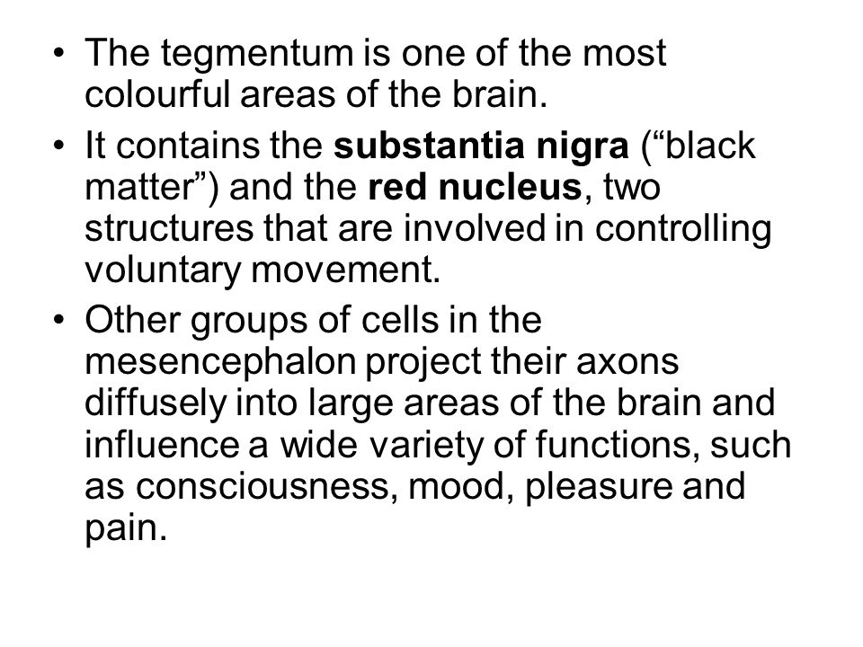 The tegmentum is one of the most colourful areas of the brain.