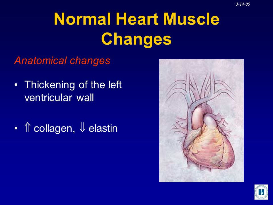 Normal Heart Muscle Changes