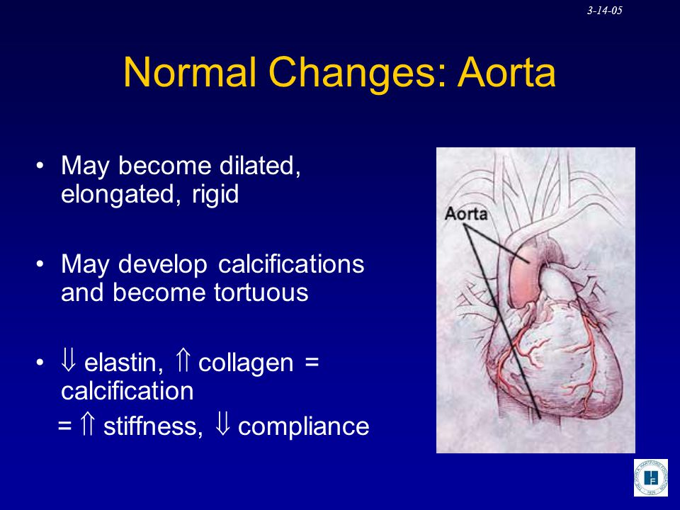 Normal Changes: Aorta May become dilated, elongated, rigid