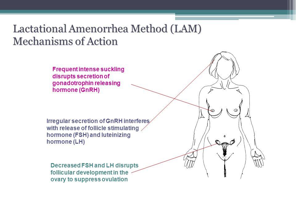 Lactational Amenorrhea Method (LAM) Mechanisms of Action