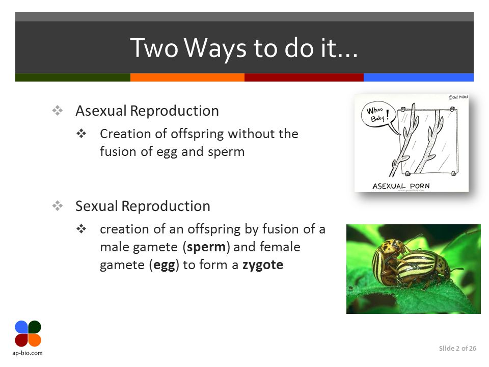 Two Ways to do it… Asexual Reproduction Sexual Reproduction