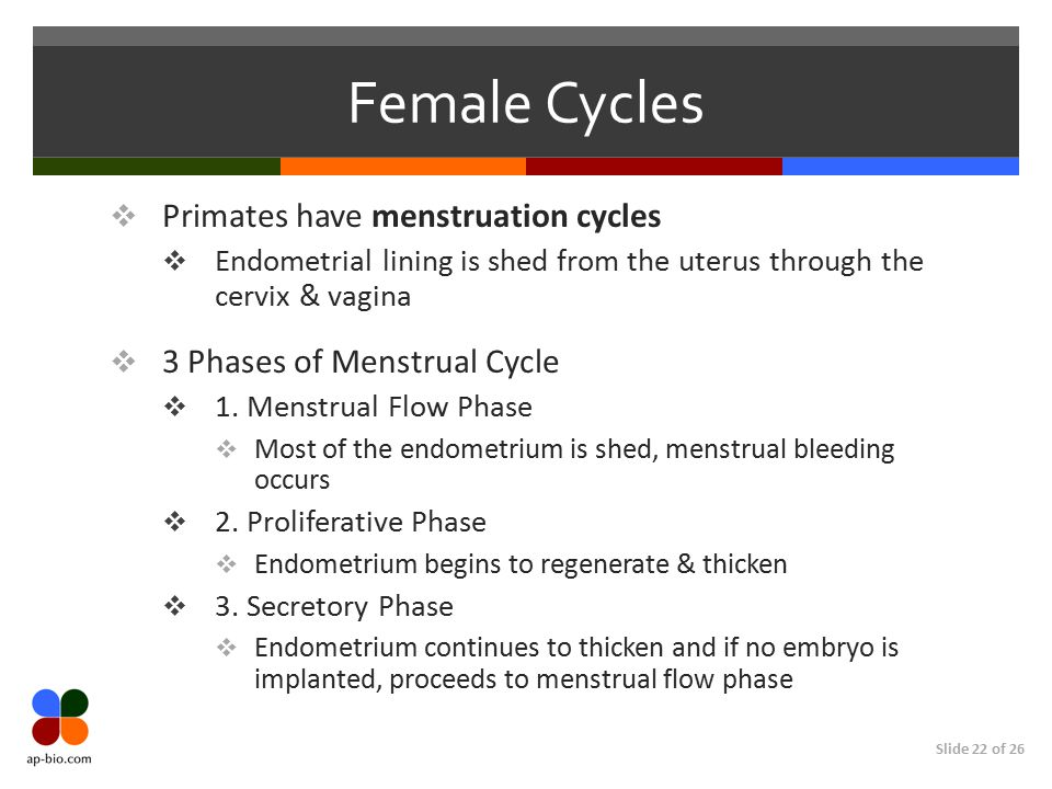 Female Cycles Primates have menstruation cycles