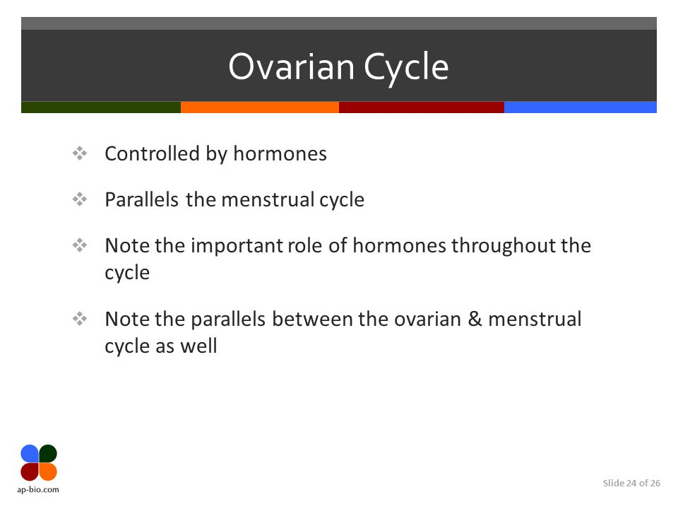 Ovarian Cycle Controlled by hormones Parallels the menstrual cycle