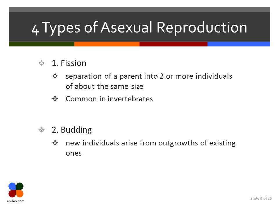 4 Types of Asexual Reproduction