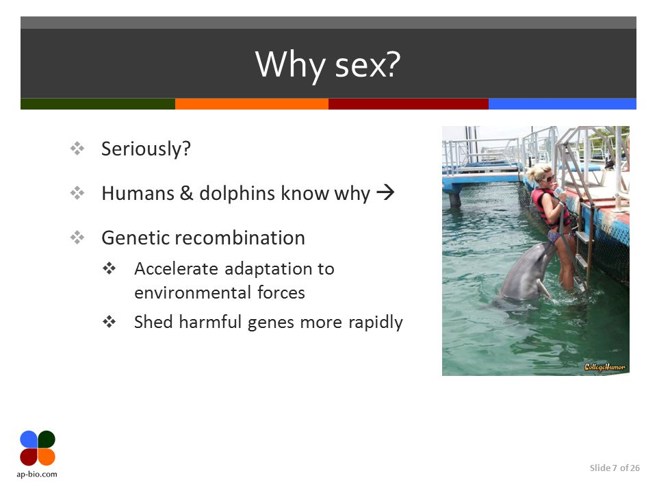 Why sex Seriously Humans & dolphins know why  Genetic recombination