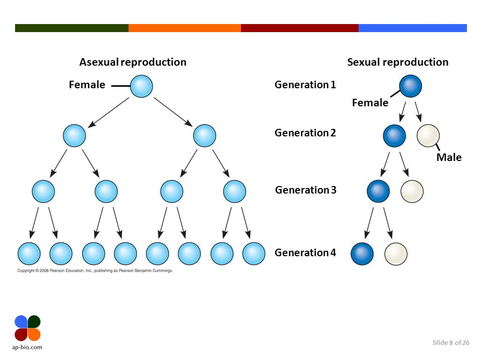 Asexual reproduction Sexual reproduction Female Female Male