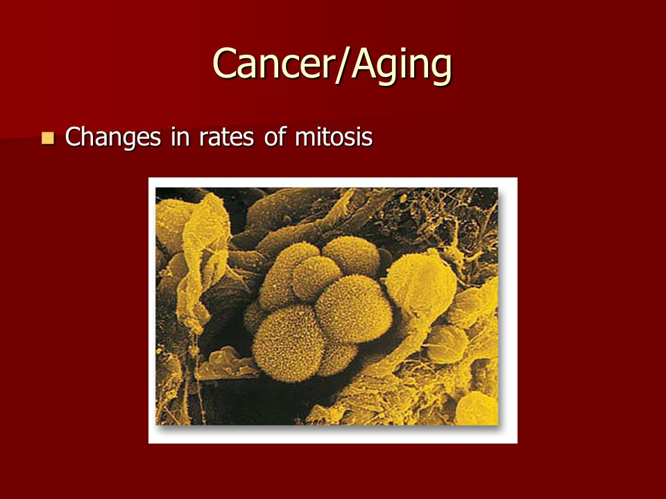 Cancer/Aging Changes in rates of mitosis