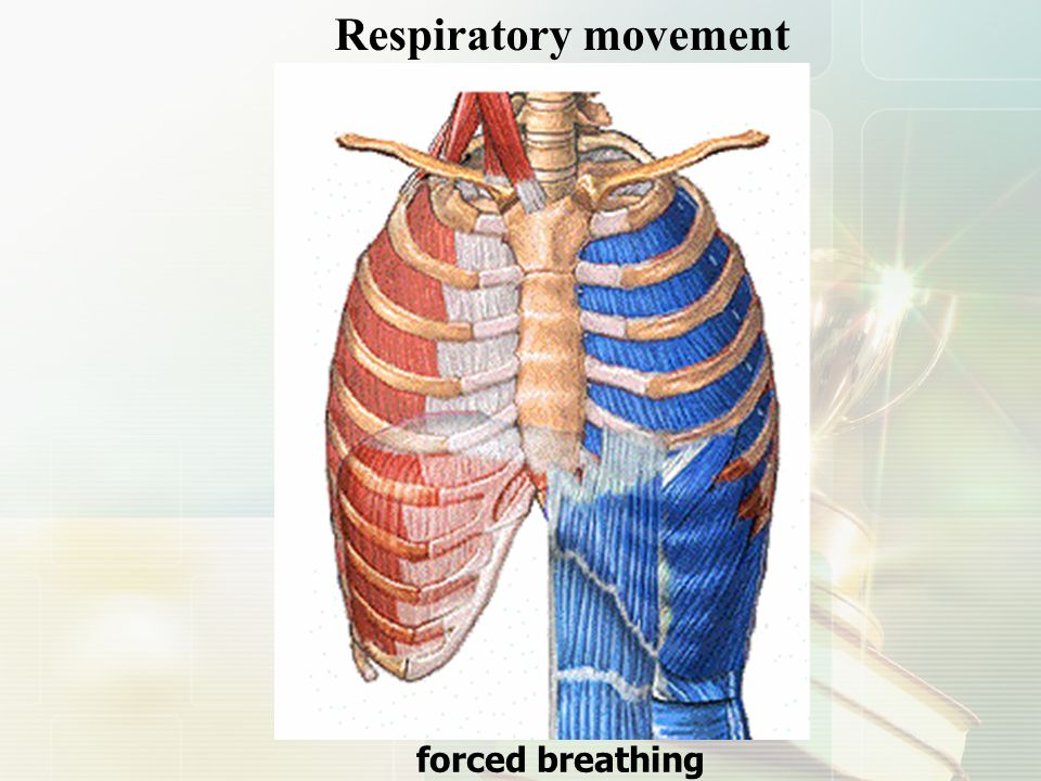Respiratory movement forced breathing