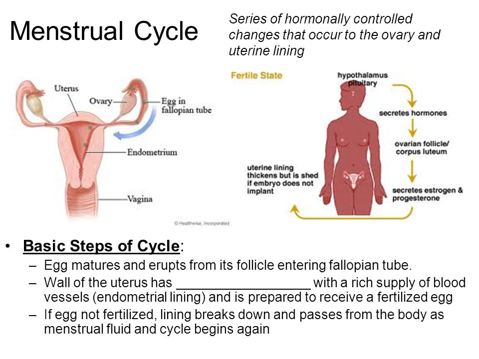Menstrual Cycle Basic Steps of Cycle: