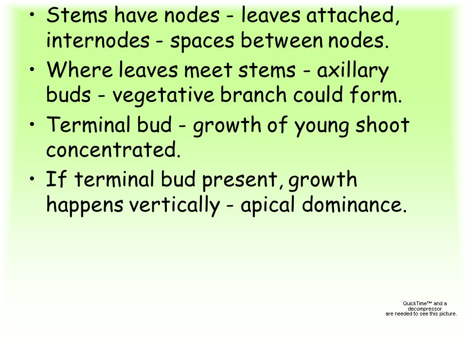 Stems have nodes - leaves attached, internodes - spaces between nodes.