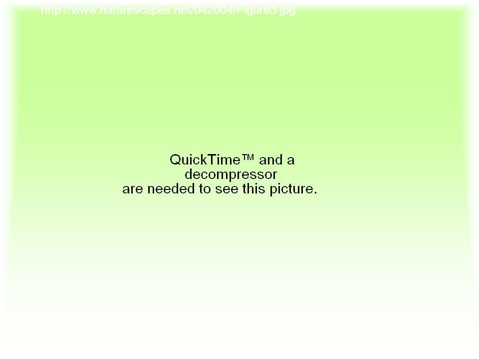http://www.naturescapes.net/042004/Figure3.jpg