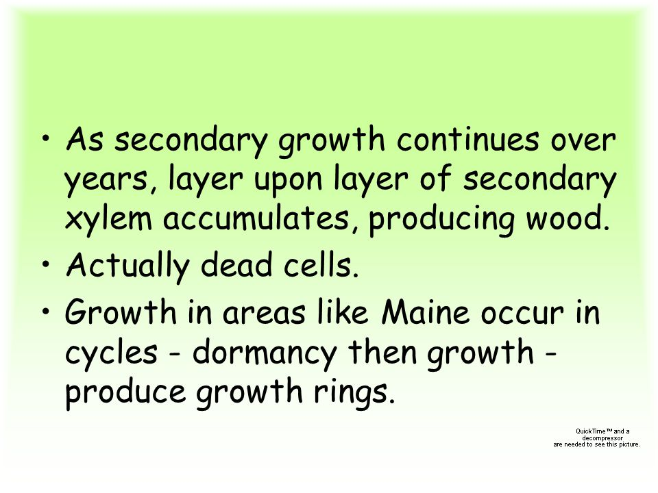As secondary growth continues over years, layer upon layer of secondary xylem accumulates, producing wood.