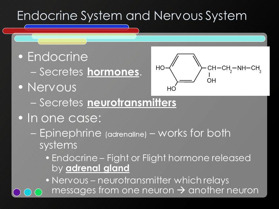 Endocrine System and Nervous System