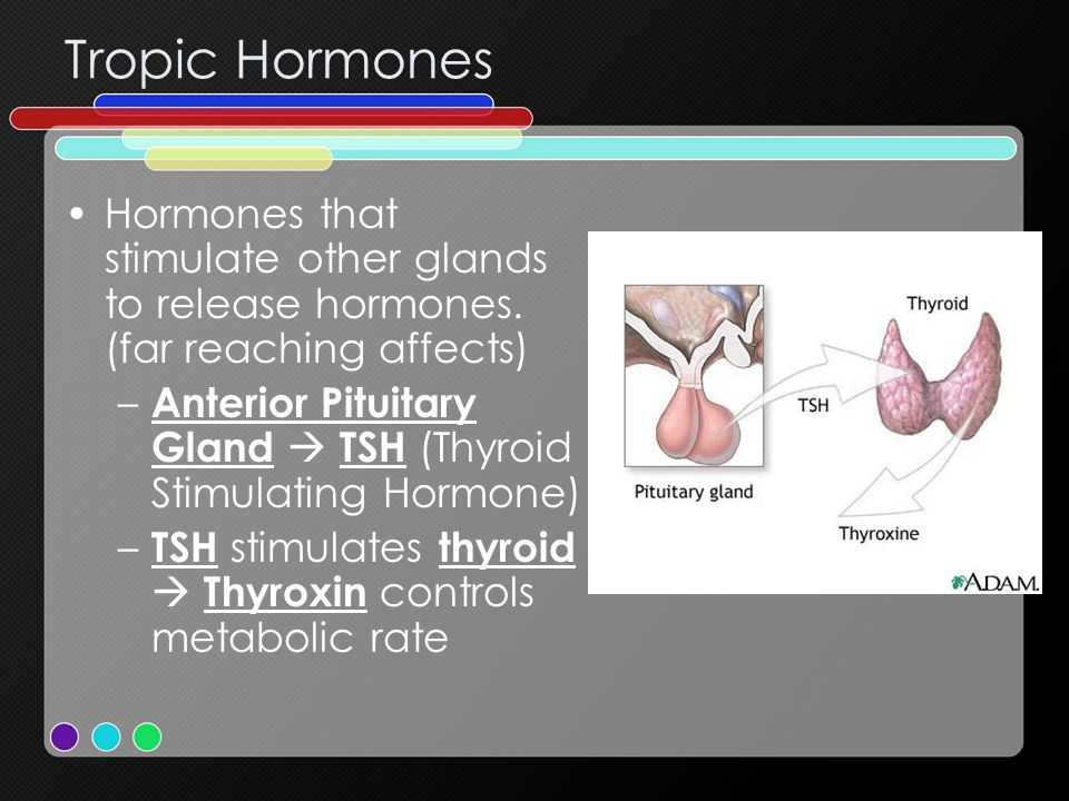 Tropic Hormones Hormones that stimulate other glands to release hormones. (far reaching affects)