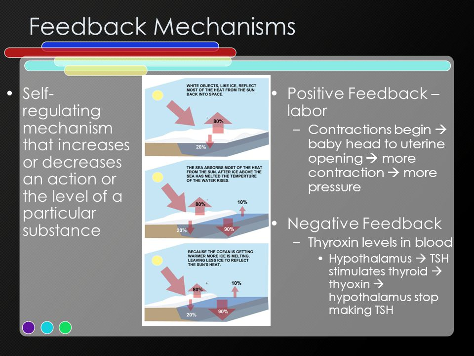 Feedback Mechanisms Self-regulating mechanism that increases or decreases an action or the level of a particular substance.