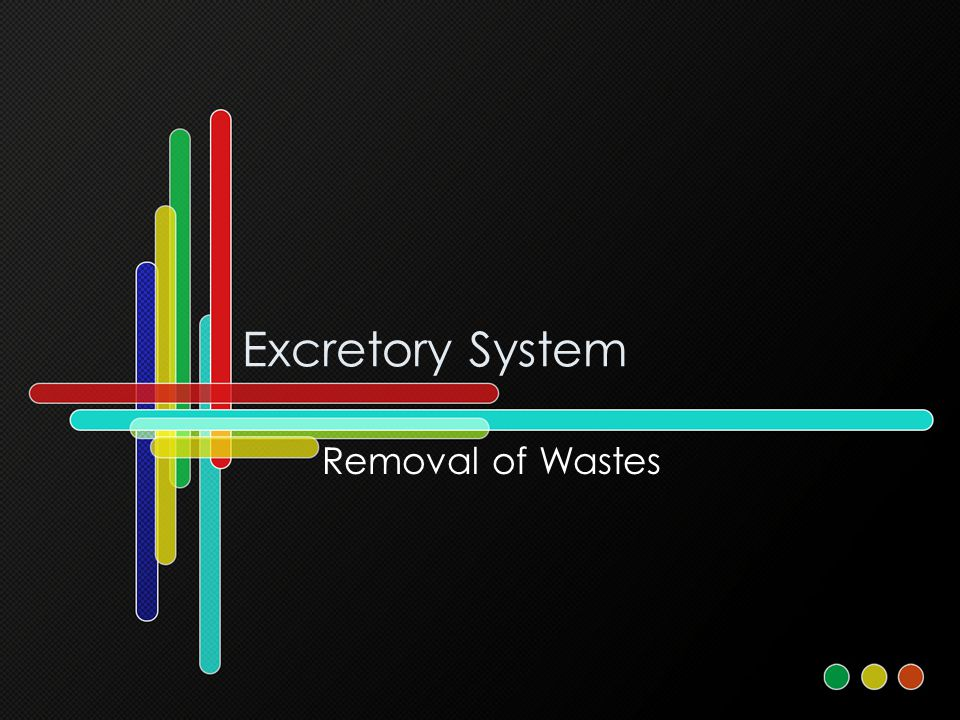 Excretory System Removal of Wastes