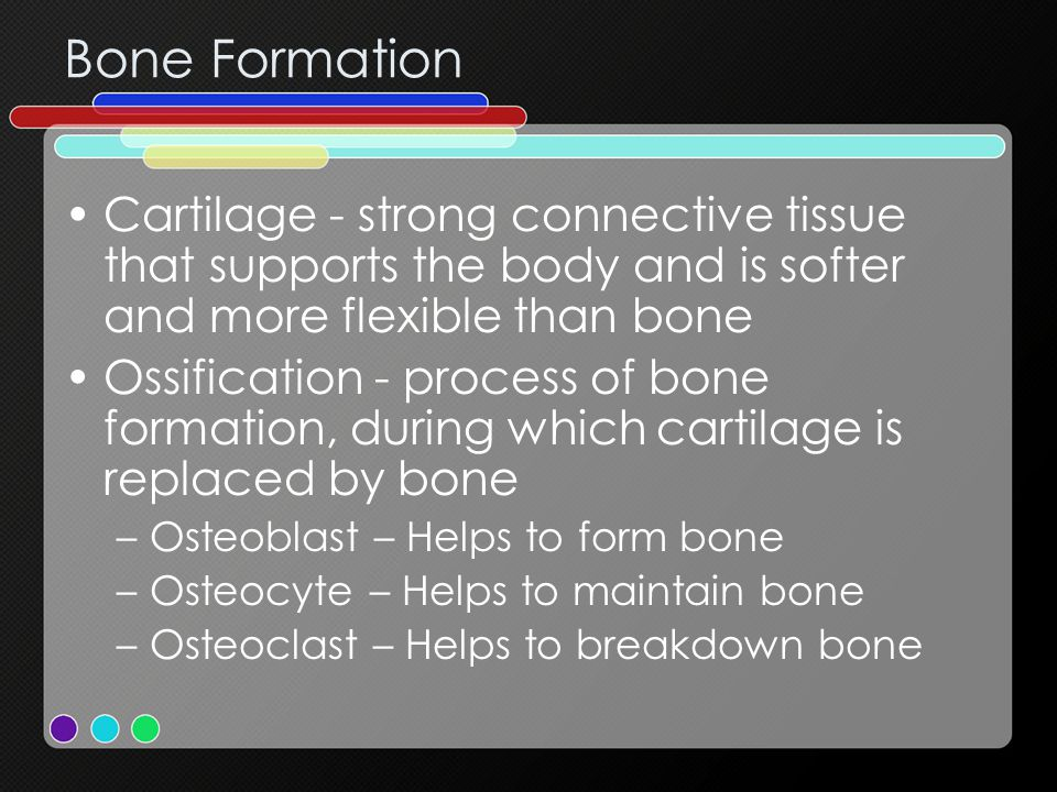 Bone Formation Cartilage - strong connective tissue that supports the body and is softer and more flexible than bone.