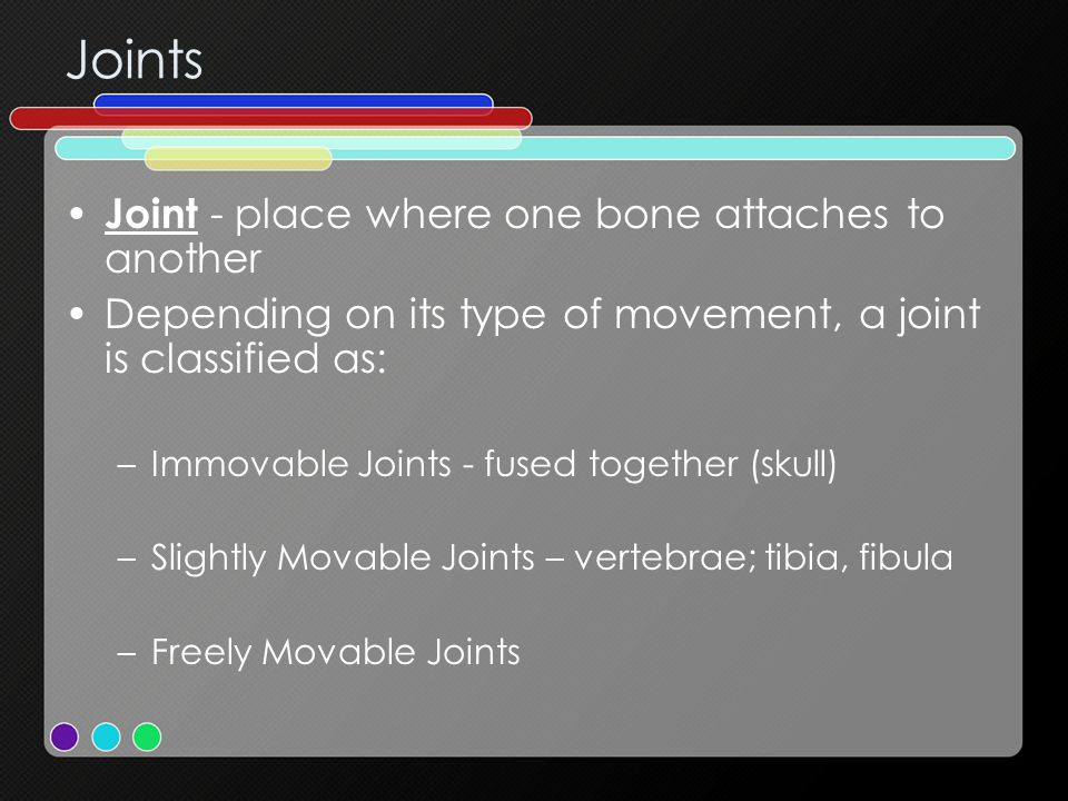 Joints Joint - place where one bone attaches to another