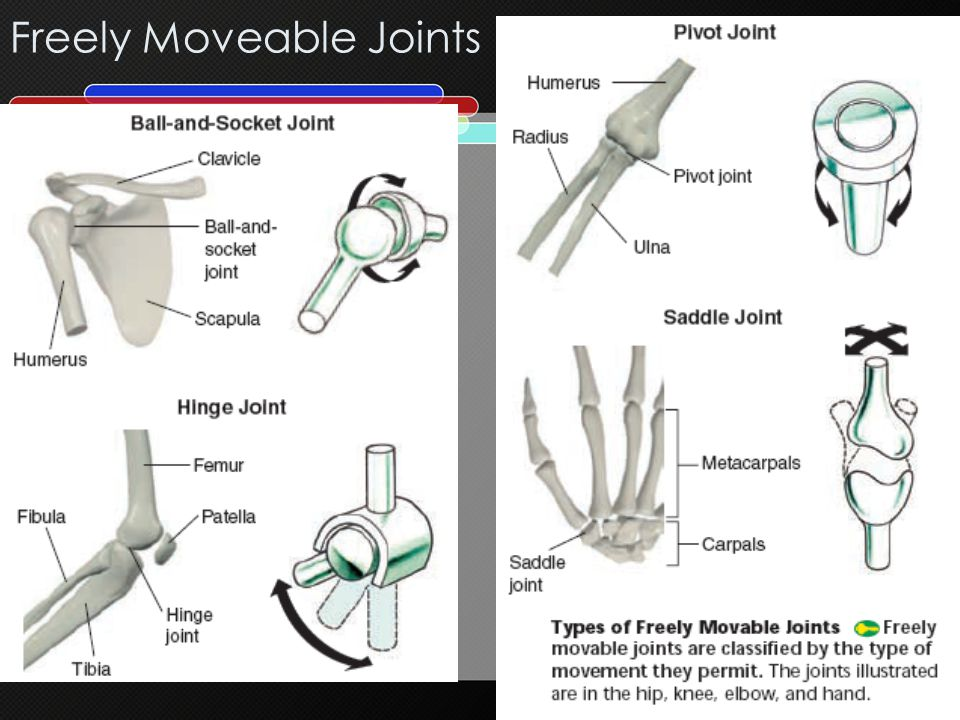 Freely Moveable Joints