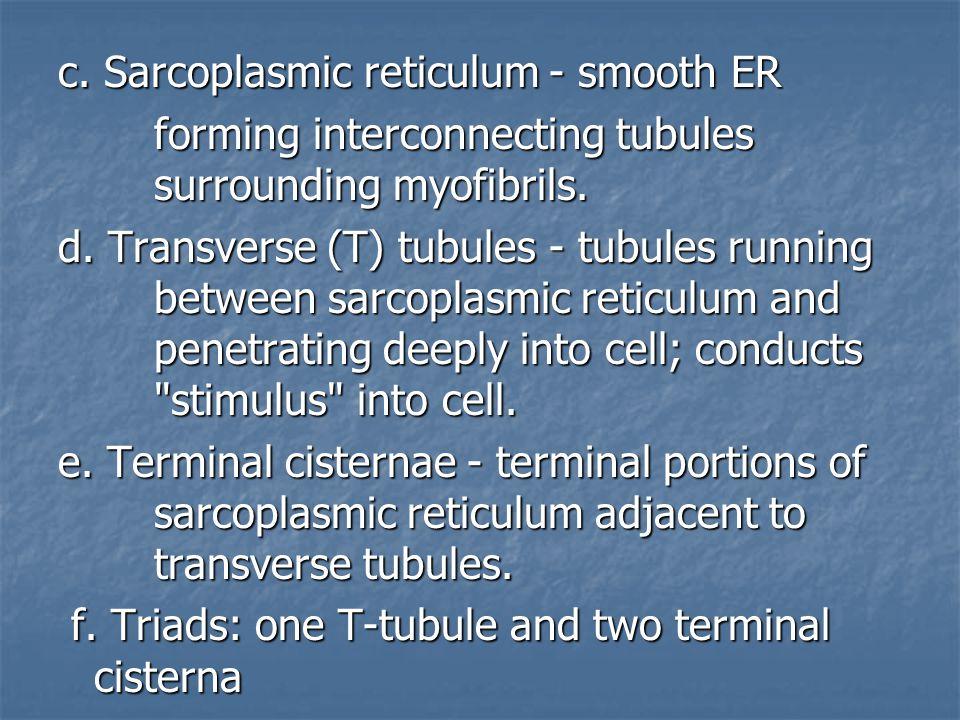 c. Sarcoplasmic reticulum - smooth ER