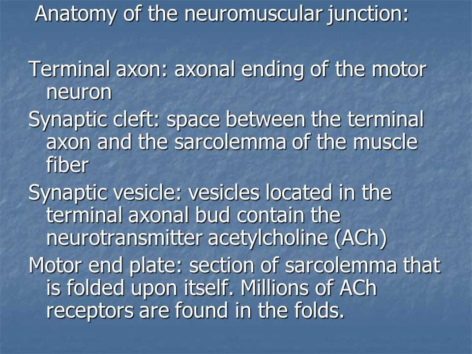 Anatomy of the neuromuscular junction: