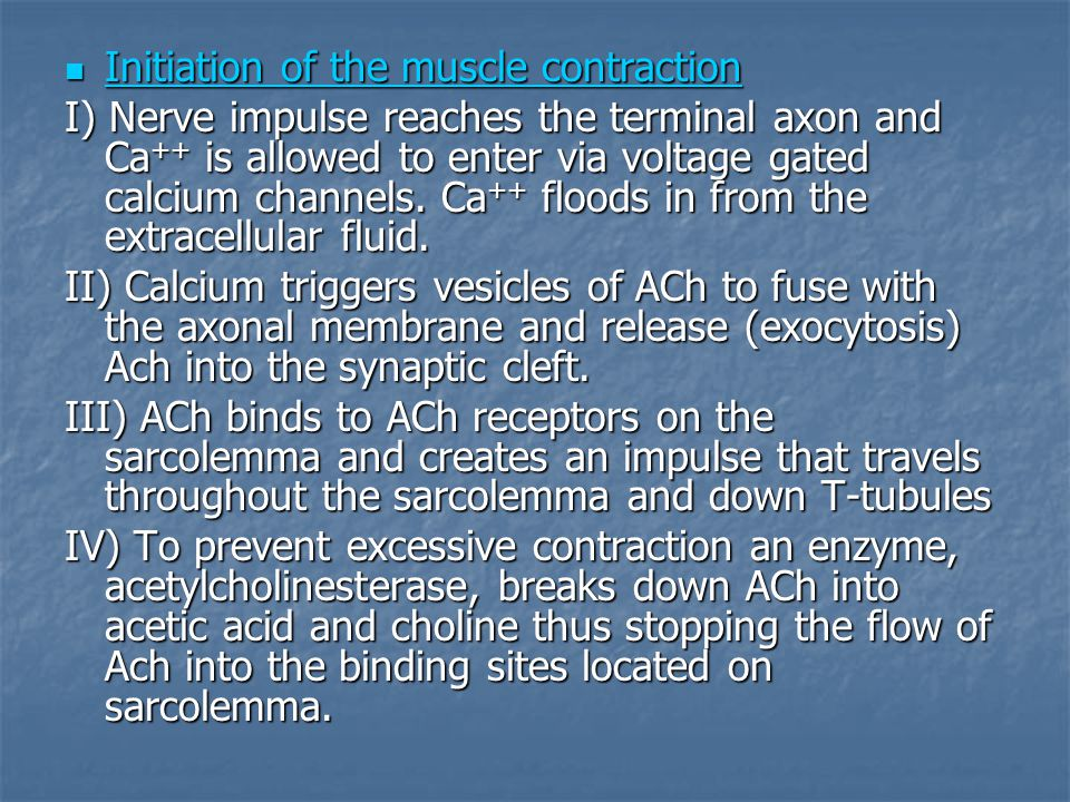 Initiation of the muscle contraction