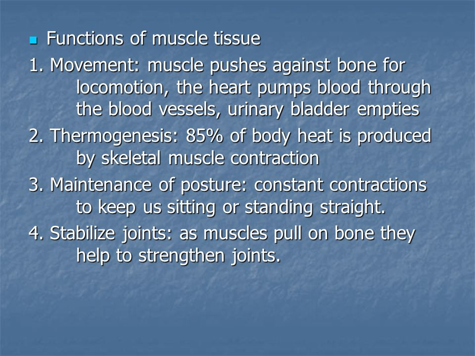 Functions of muscle tissue