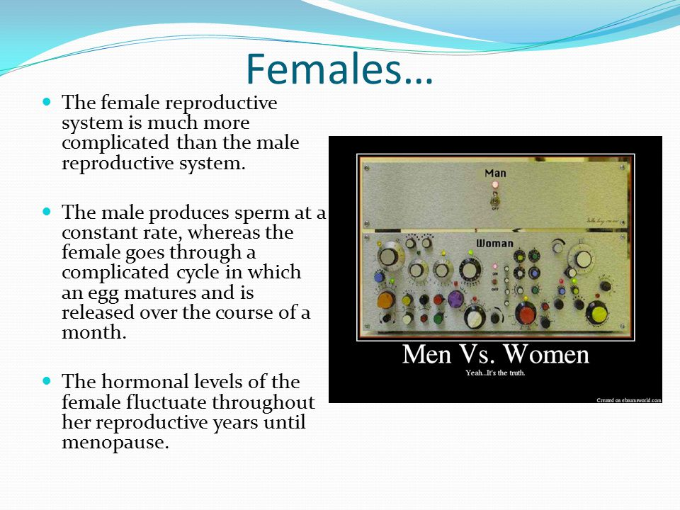 Females… The female reproductive system is much more complicated than the male reproductive system.
