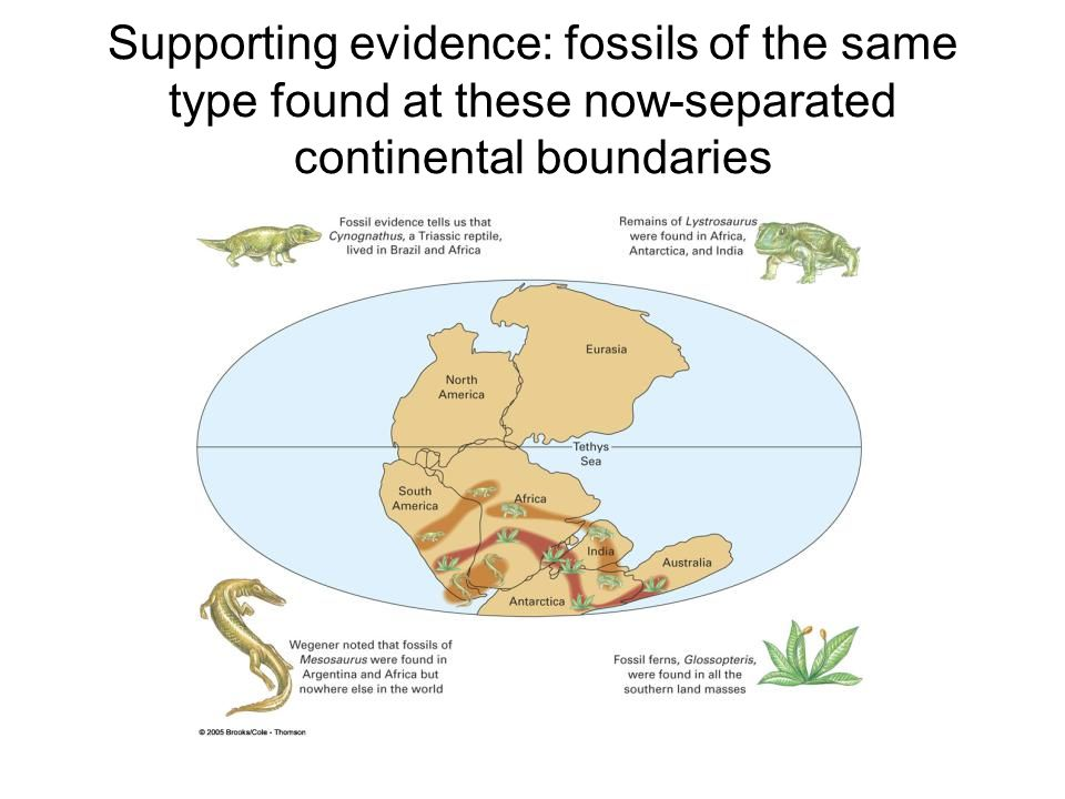 Supporting evidence: fossils of the same type found at these now-separated continental boundaries