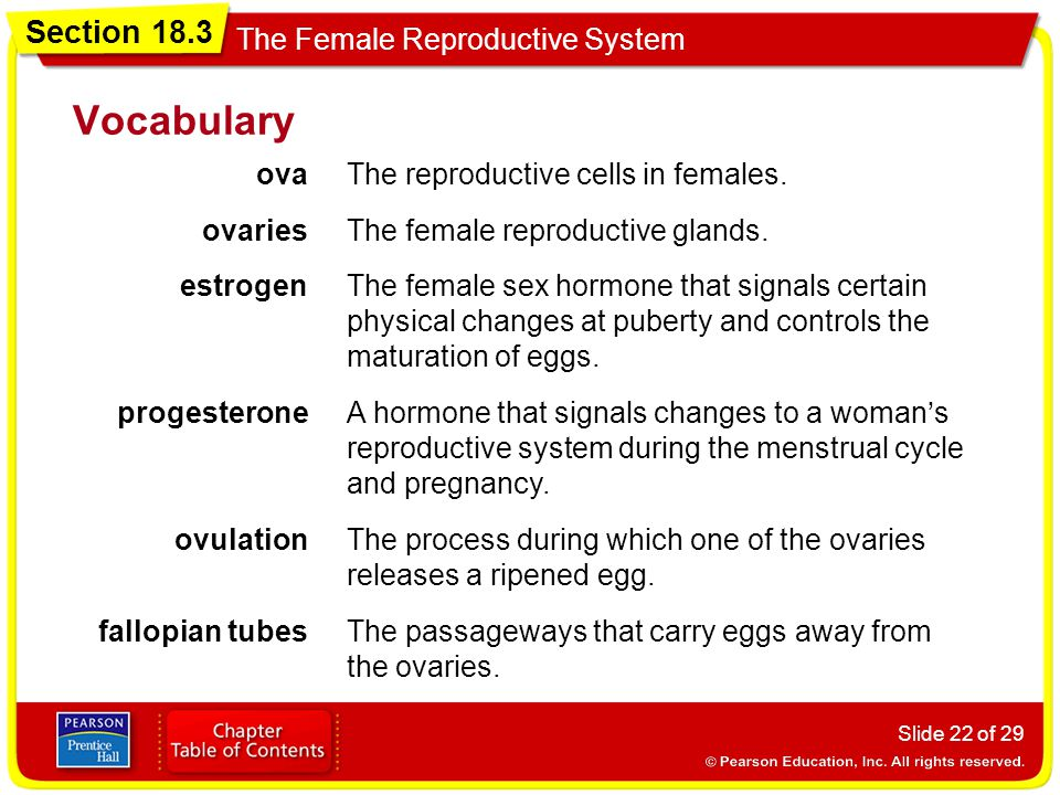 Vocabulary ova The reproductive cells in females. ovaries