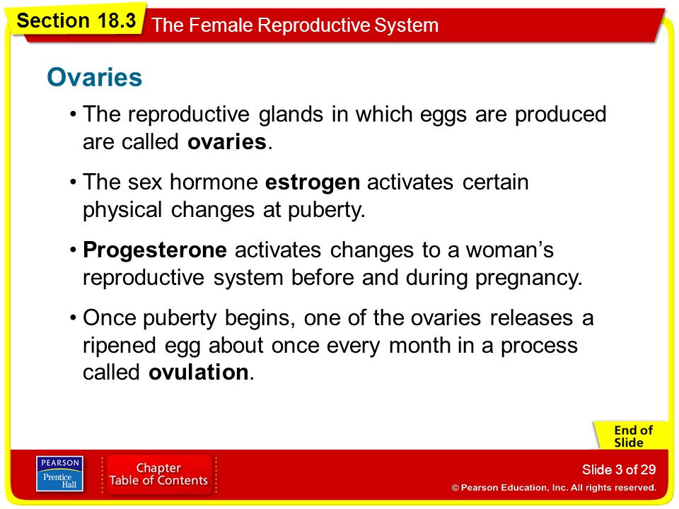Ovaries The reproductive glands in which eggs are produced are called ovaries.