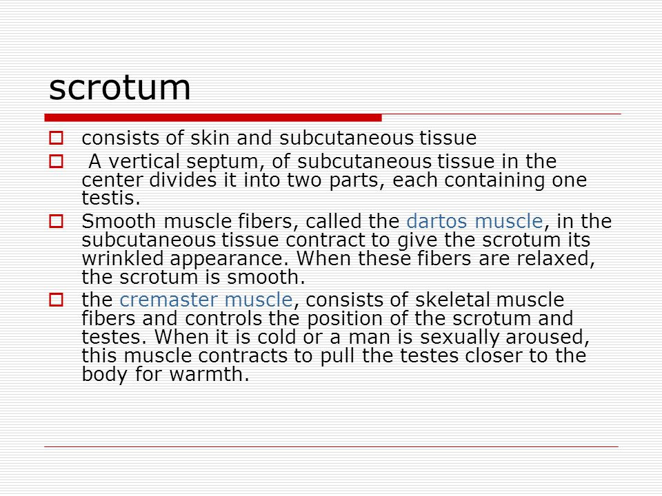 scrotum consists of skin and subcutaneous tissue