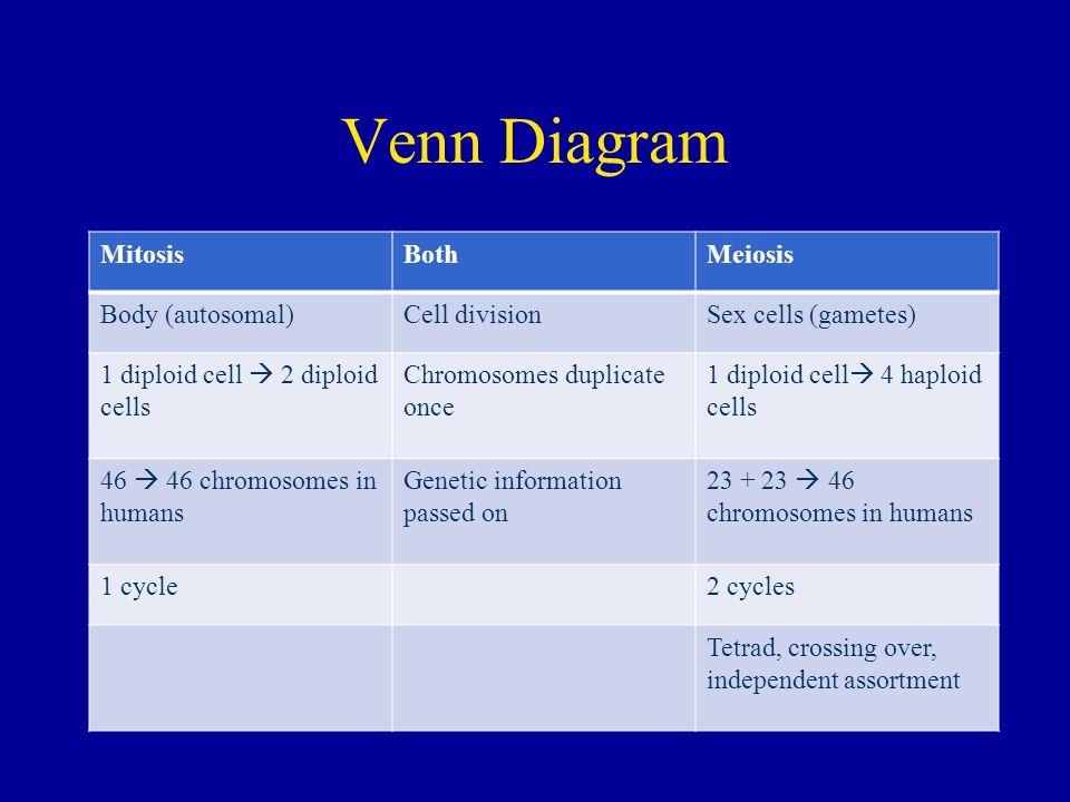 Venn Diagram Mitosis Both Meiosis Body (autosomal) Cell division