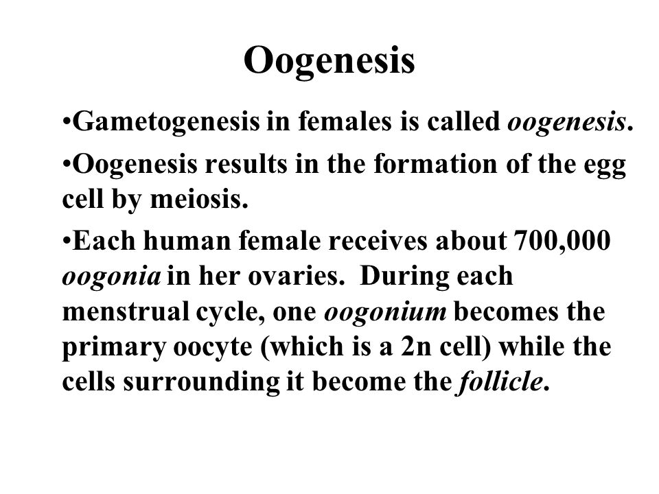 Oogenesis Gametogenesis in females is called oogenesis.