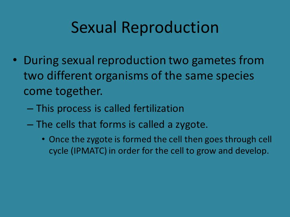 Sexual Reproduction During sexual reproduction two gametes from two different organisms of the same species come together.