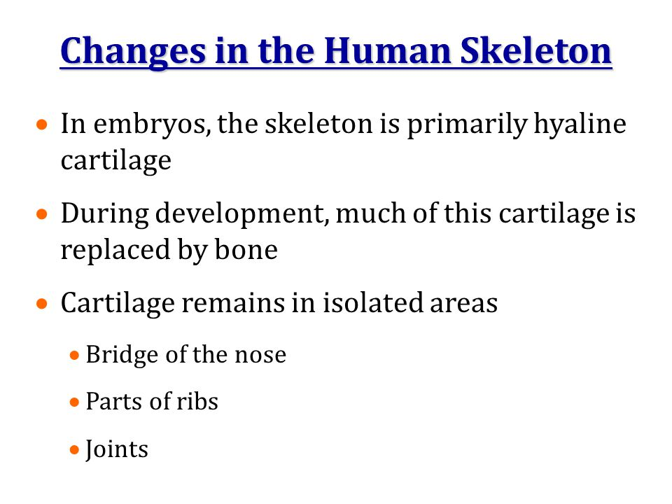 Changes in the Human Skeleton