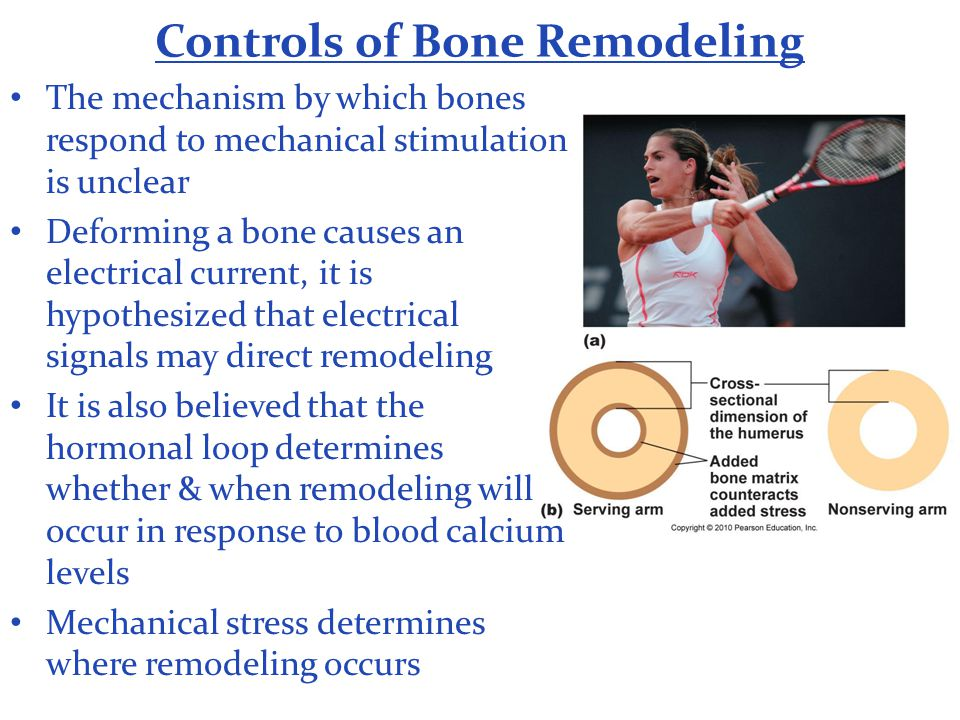 Controls of Bone Remodeling