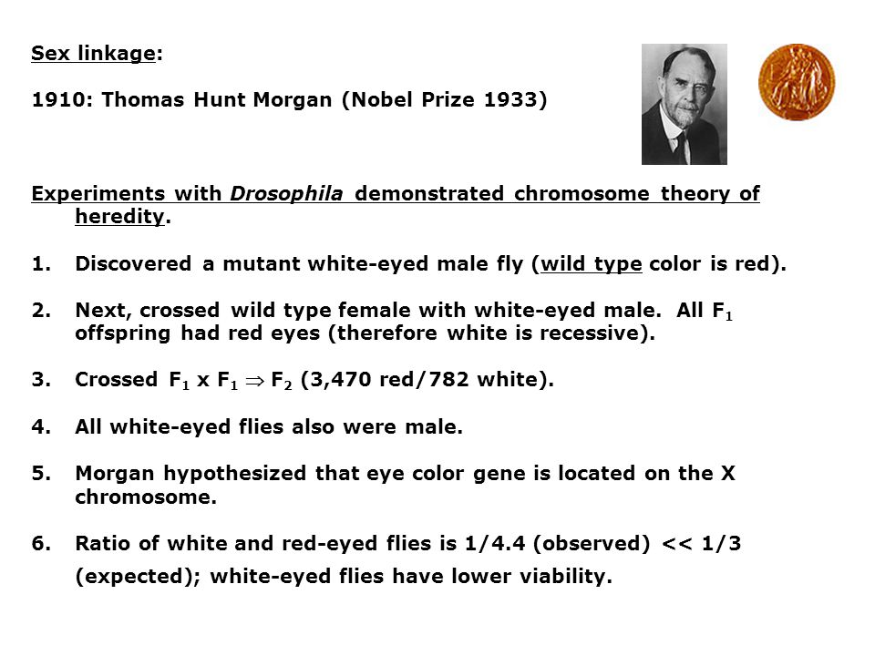 Sex linkage: 1910: Thomas Hunt Morgan (Nobel Prize 1933) Experiments with Drosophila demonstrated chromosome theory of heredity.