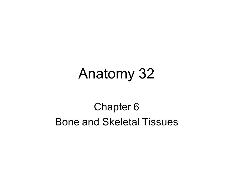 Chapter 6 Bone and Skeletal Tissues