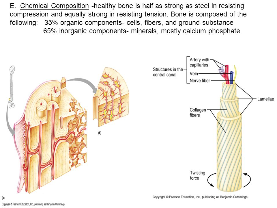 E. Chemical Composition -healthy bone is half as strong as steel in resisting compression and equally strong in resisting tension. Bone is composed of the following: 35% organic components- cells, fibers, and ground substance